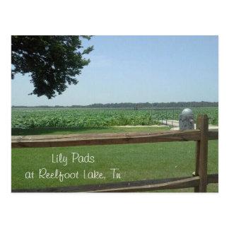 Lilien-Auflagen in Reelfoot See, Tn Postkarte