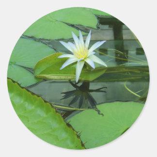 Lilien-Blumen-Lotos in der Blüte Runder Aufkleber