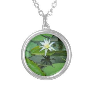 Lilien-Blumen-Lotos in der Blüte Versilberte Kette