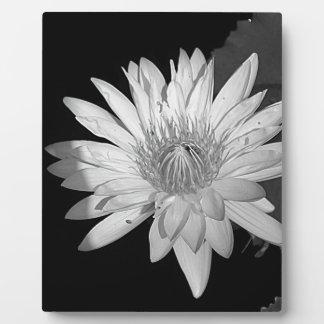 Lilien-Schwarzweiss-Art Fotoplatte