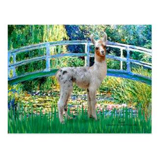Lilien-Teich-Brücke - Baby-Lama Postkarte