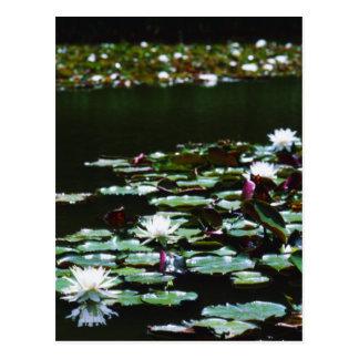 Lilien-Teich Postkarte