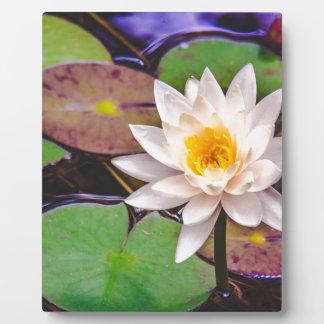 Lilienauflage auf dem Wasser Fotoplatte