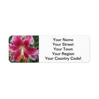 Liliestargazer-lila Blume
