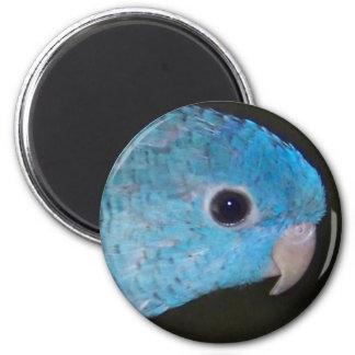 Linnie Parakeet Magnet Runder Magnet 5,7 Cm