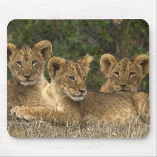 Lion Siblings Mauspads