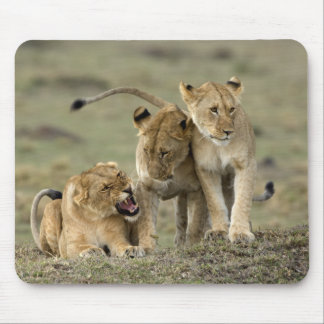 Lion Siblings Mousepad