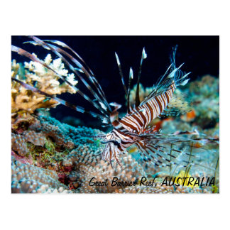 Lionfish auf der Great Barrier Reef Postkarte