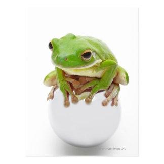 Litora Infrafrenata, Frosch Postkarte