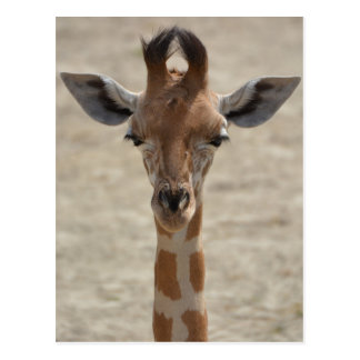 Little Giraffe Postkarte