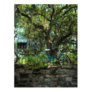 Live Oak-Baum und klassisches Fahrrad Postkarte