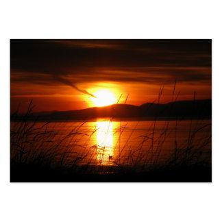 Lodernder Birken-Bucht-Sonnenuntergang Mini-Visitenkarten