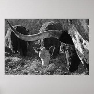 Longhorn und Freunde auf dem Bauernhof Poster