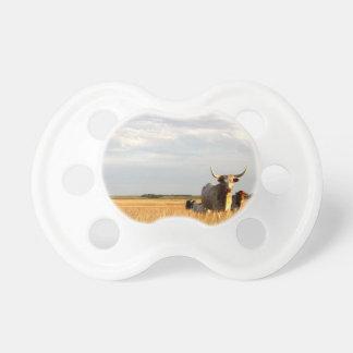 Longhorns auf der offenen Strecke Schnuller