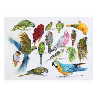 Lose und Lose Papageien auf Losen und Lose Postkarte