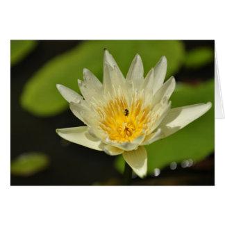 Lotos-Blume - Wasserlilie Gruß-Karten Karte