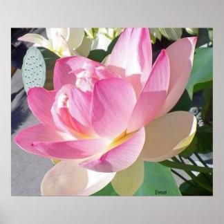 Lotos-Blumen-Plakat Poster