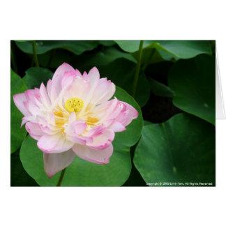 Lotus-Blüte Karte
