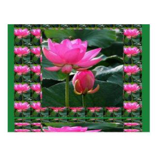 LOTUS: Chakra Rosen-Rosa-Grün-Garten Postkarten