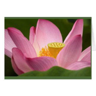 Lotus-Karte Karte