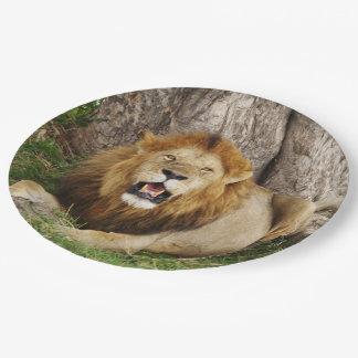 Löwe bei Maasai Mara 1 Pappteller