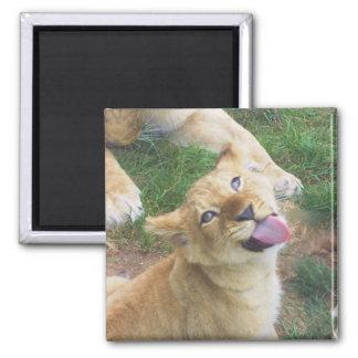 Löwe-CUB-Magnet Quadratischer Magnet