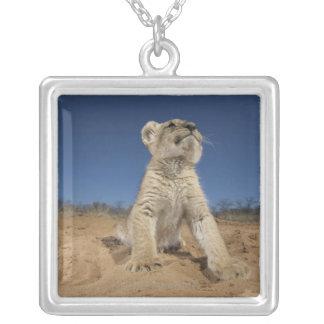 Löwe CUB (Panthera Löwe) sitzend auf Sand, Namibia Versilberte Kette