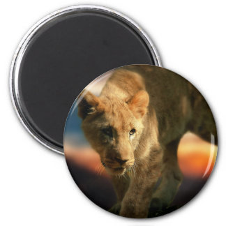 Löwe CUB Runder Magnet 5,7 Cm