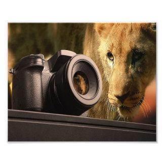 Löwe durch Kameraobjektiv Fotodruck