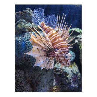 Löwe-Fische, Abenteuer-Aquarium Postkarte