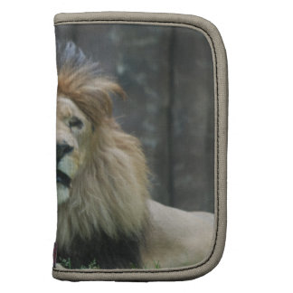 Löwe-Geldbörsen-Folio Mappen