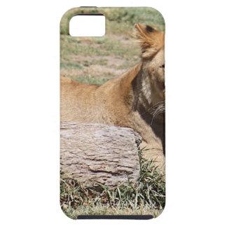 Löwe iPhone 5 Etui