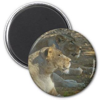 Löwe-Magnet Runder Magnet 5,7 Cm