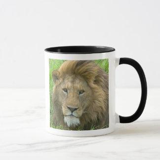Löwe-männliches Porträt, Ostafrika, Tansania, Tasse