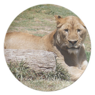 Löwe Melaminteller
