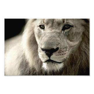 Löwe Photographischer Druck
