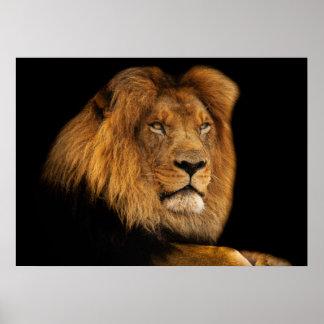 Löwe Poster