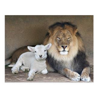 Löwe und Lamm Postkarte