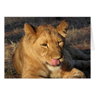 (Löwe-Verein-) Löwin, die ihre Nase leckt Karte