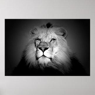 Löwe - wildes Tier-Fotografie Poster