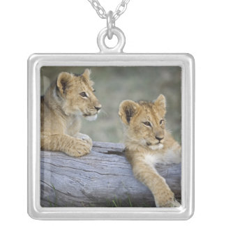 Löwejunge auf Klotz, Panthera Löwe, Masai Mara, Versilberte Kette