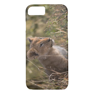 Löwejunges (Panthera Löwe), iPhone 8/7 Hülle