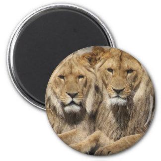 Löwen Runder Magnet 5,7 Cm