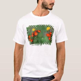 Löwenzahn 3 T-Shirt