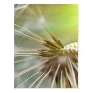 Löwenzahn-Blume Postkarte