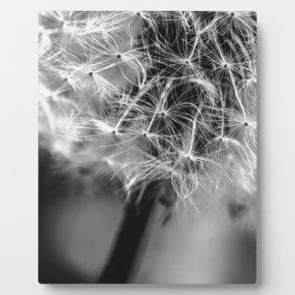 Löwenzahn-Monochrom Fotoplatte