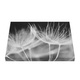 Löwenzahn-Nahaufnahme in Schwarz-weißem Leinwanddruck