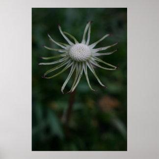 Löwenzahn ohne Blumenblätter fantasiereiche Bilder Poster