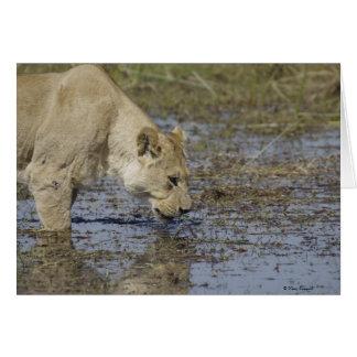 Löwin, die 1 trinkt karte