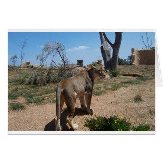 Löwin, die ihren Rasen patrouilliert Karte